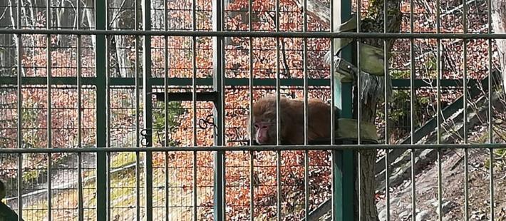 zoo, gdański ogród zoologiczny, makak, www.polnocna.tv, www.strefahistorii.pl, polnocna
